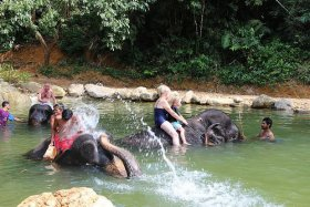 Elephant Bathing at Kapong in Phang Nga